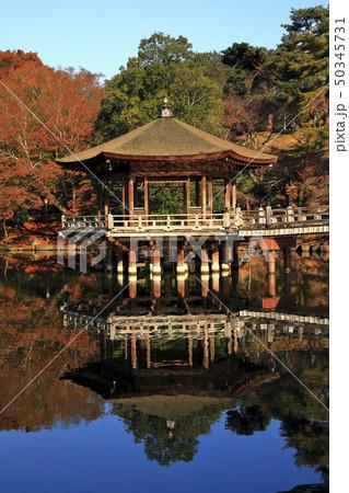 11月秋 紅葉の浮見堂-奈良の秋景色- 50345731