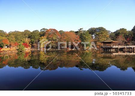 11月秋 紅葉の浮見堂-奈良の秋景色- 50345733