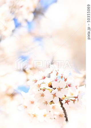 桜 ソメイヨシノ 春 イメージ 50355069