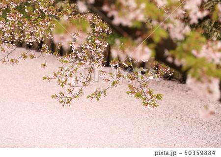 ソメイヨシノと花いかだ 春のイメージ 50359884