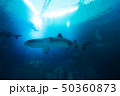 Shark in the ocean. Coral reef underwater with 50360873