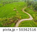 Winding Path between Rice Terraces. Aerial View 50362516