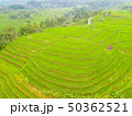 Rice Terraces and Indonesian Village. Aerial View 50362521