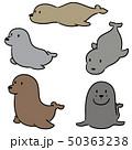 vector set of sea lion 50363238
