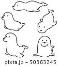 vector set of sea lion 50363245