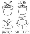 手描き 植物学 マンガのイラスト 50363352