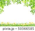 新緑(若葉) 50366585