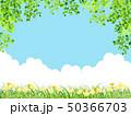 新緑(若葉) 50366703