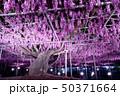 花 春 風景の写真 50371664