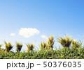 水田 50376035