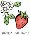 花 苺 果物のイラスト 50376752
