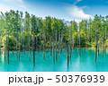 青い池 水没林 池の写真 50376939