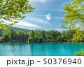 青い池 水没林 池の写真 50376940