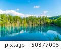 青い池 水没林 池の写真 50377005