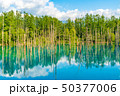 青い池 水没林 池の写真 50377006