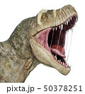 T-rex head close-up. 50378251