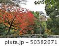 和歌山城庭園の紅葉 50382671
