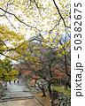 紅葉から見える和歌山城 50382675