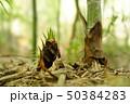 旬の味覚 タケノコ 50384283