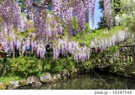 春日大社 萬葉植物園 50387548