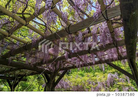 春日大社 萬葉植物園 50387580