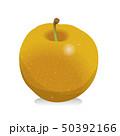 梨 秋の味覚 果物のイラスト 50392166