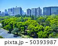 日比谷公園の森と東京の街並み 50393987