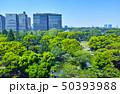 日比谷公園の森と東京の街並み 50393988