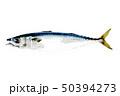真鯖 鯖 魚のイラスト 50394273