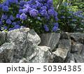 紫陽花 50394385