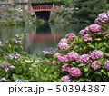 紫陽花 50394387