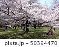 小金井公園の桜(西口の桜の園) 50394470