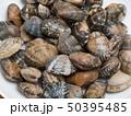 貝 食材 浅蜊の写真 50395485