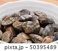 貝 食材 浅蜊の写真 50395489