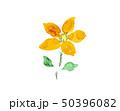 花 オレンジ 手書き 手描き  50396082