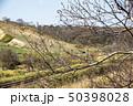 新緑の春 50398028