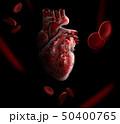 Anatomy of Human Heart 3D illustration - Isolated on black 50400765