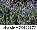 植物 お花 フラワーの写真 50400975