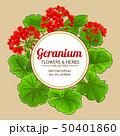 geranium vector frame 50401860