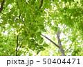 新緑と光 50404471