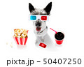 dog to the movies 50407250