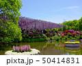 茨城県フラワーパーク 藤棚 50414831