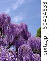 茨城県フラワーパーク ふじの花 50414833