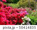 茨城県フラワーパーク ツツジ 50414835