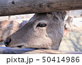 動物園のロバ、群馬サファリパーク 50414986
