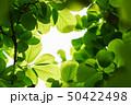 新緑 50422498