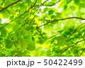 新緑 50422499