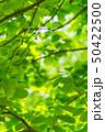 新緑 50422500