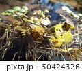 ミツバチ 50424326