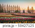 あけぼの山農業公園 チューリップ 50427125